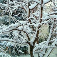 Αυτή είναι η πιθανή ημερομηνία μέσα στο Δεκέμβη για μεγάλο χιονιά