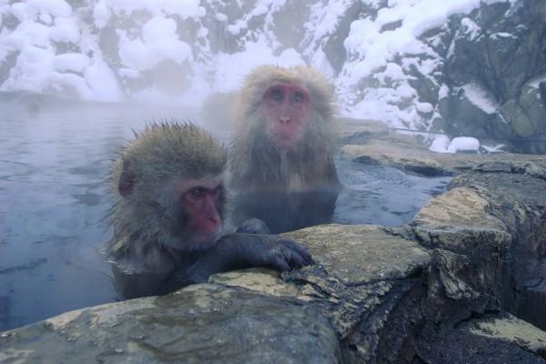 Monkey Business… (βίντεο)
