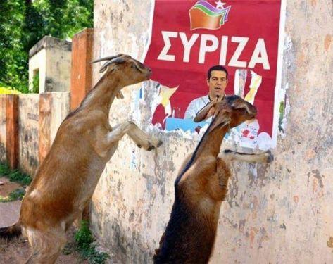 Αποτέλεσμα εικόνας για ο σανός του ΣΥΡΙΖΑ
