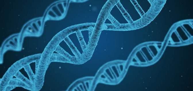 Είμαστε εξελιγμένα πιθηκοειδή: Πώς ένα απλό πείραμα απέδειξε την θεωρία του Δαρβίνου [εικόνα]