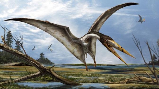 Κίνα: Ανακαλύφθηκαν 215 απολιθωμένα αυγά πτερόσαυρων, τα περισσότερα που έχουν ποτέ βρεθεί