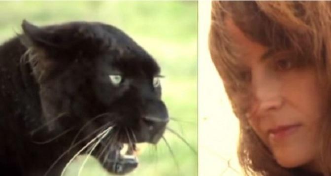 Κανείς δεν μπορούσε να πλησιάσει το κλουβί αυτής της λεοπάρδαλης! Ώσπου μία μέρα αυτή η γυναίκα έκανε κάτι απίστευτο…  (βίντεο)