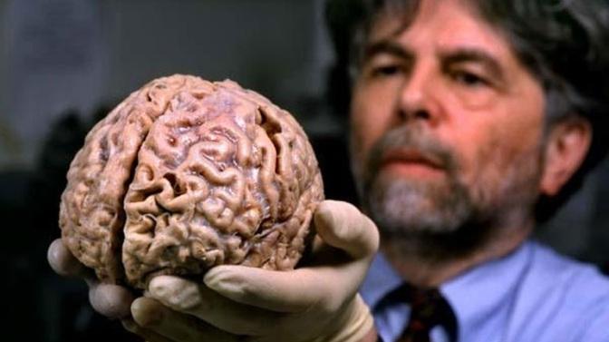 Ο εγκέφαλος μας έγινε σφαιρικός πριν από 100.000 έως 35.000 χρόνια