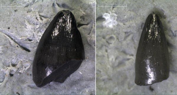 Κροκόδειλοι στην Εύβοια και κόμπρες στον Αξιό πριν 18 εκατ. χρόνια