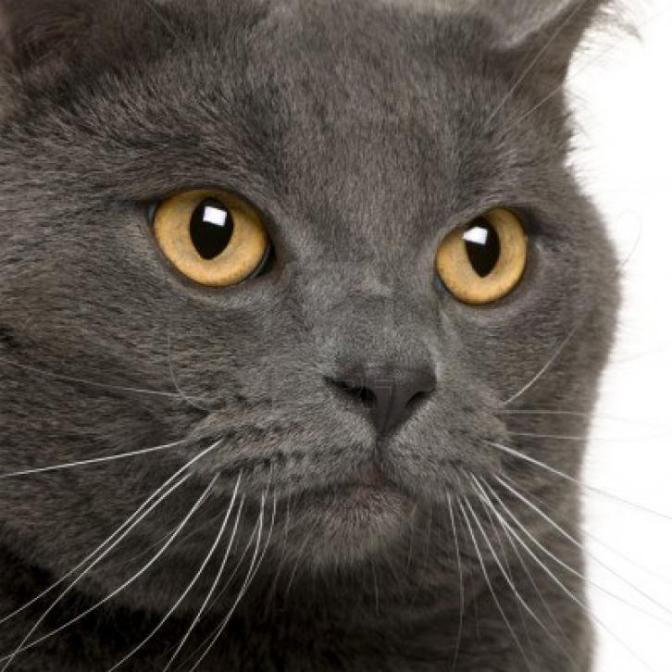 Ο Πάπας διέταξε να σφαχτούν οι γάτες, γιατί πίστευε ότι ήταν ο σατανάς. Έτσι πυροδότησε επιδημία πανούκλας στην Ευρώπη του Μεσαίωνα …