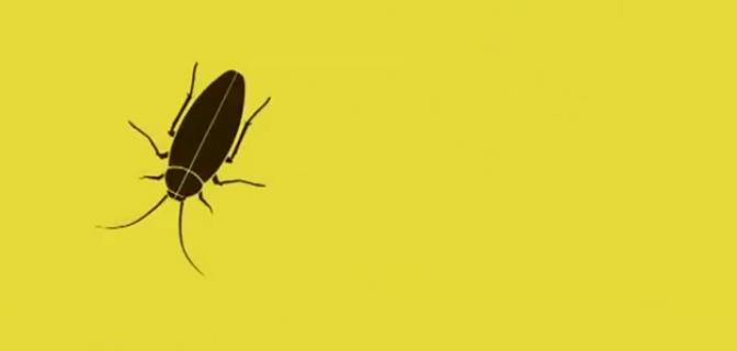 Γιατί η κατσαρίδα είναι o πιο τέλειος οργανισμός πάνω στον πλανήτη;