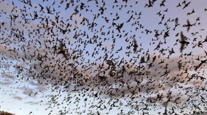 Το «ηφαίστειο» των νυχτερίδων στο Μεξικό