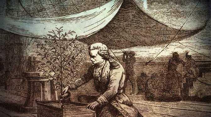 """Η ιστορία του μοναδικού φυτού καφέ, που """"κατέκτησε"""" τον κόσμο…"""