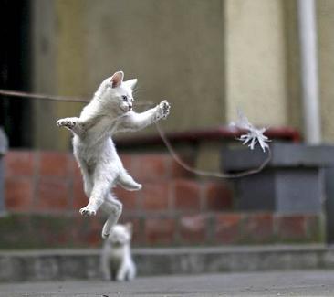 Γάτα, ο χνουδωτός δολοφόνος