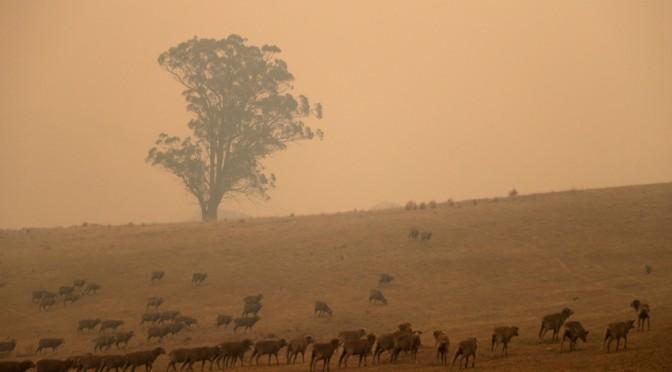 Αυστραλία: Το «ολοκαύτωμα» της πανίδας – Οι επιστήμονες προειδοποιούν