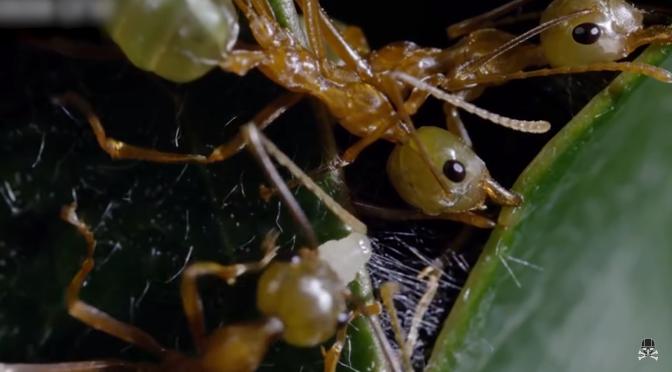 Μυρμήγκια: ο υπολογιστης της φύσης (βίντεο)