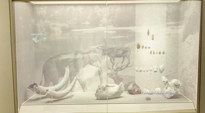 Λάρισα: Στον Πηνειό ζούσαν κάποτε ελέφαντες, ιπποπόταμοι και ρινόκεροι