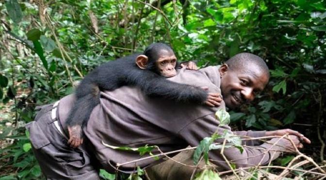 Μοιάζουμε με τους χιμπατζήδες περισσότερο από όσο νομίζουμε: Χάνουμε φίλους όσο μεγαλώνουμε