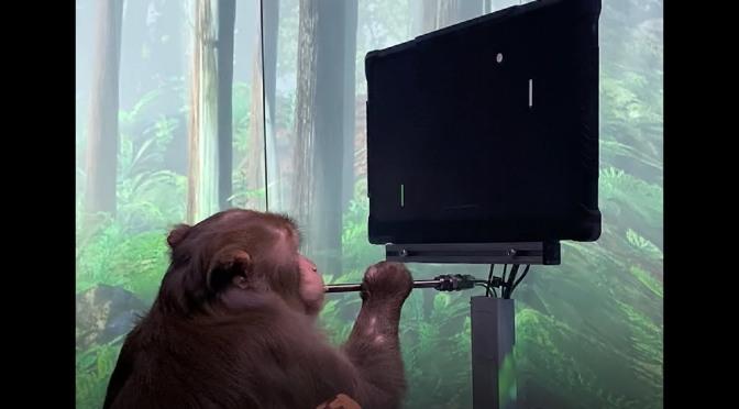 Ο Έλον Μασκ τα κατάφερε: Ένας πίθηκος μόλις έπαιξε videogames «τηλεπαθητικά» με εμφυτεύματα στο εγκέφαλο