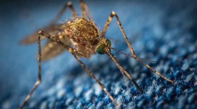 Γενετικά τροποποιημένα κουνούπια εξαπολύει εταιρία που χρηματοδοτεί ο Μπιλ Γκέιτς (video)