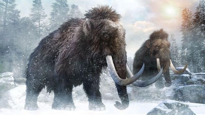 Επιστημονική ομάδα θέλει να επαναφέρει στον κόσμο τα μαμούθ!